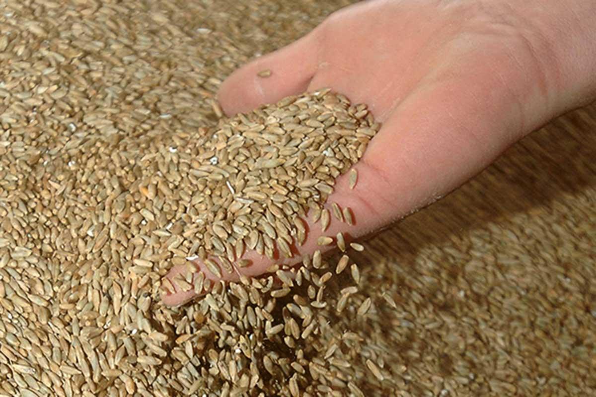 Verfahrenstechnologe Mühlen- und Getreidewirtschaft